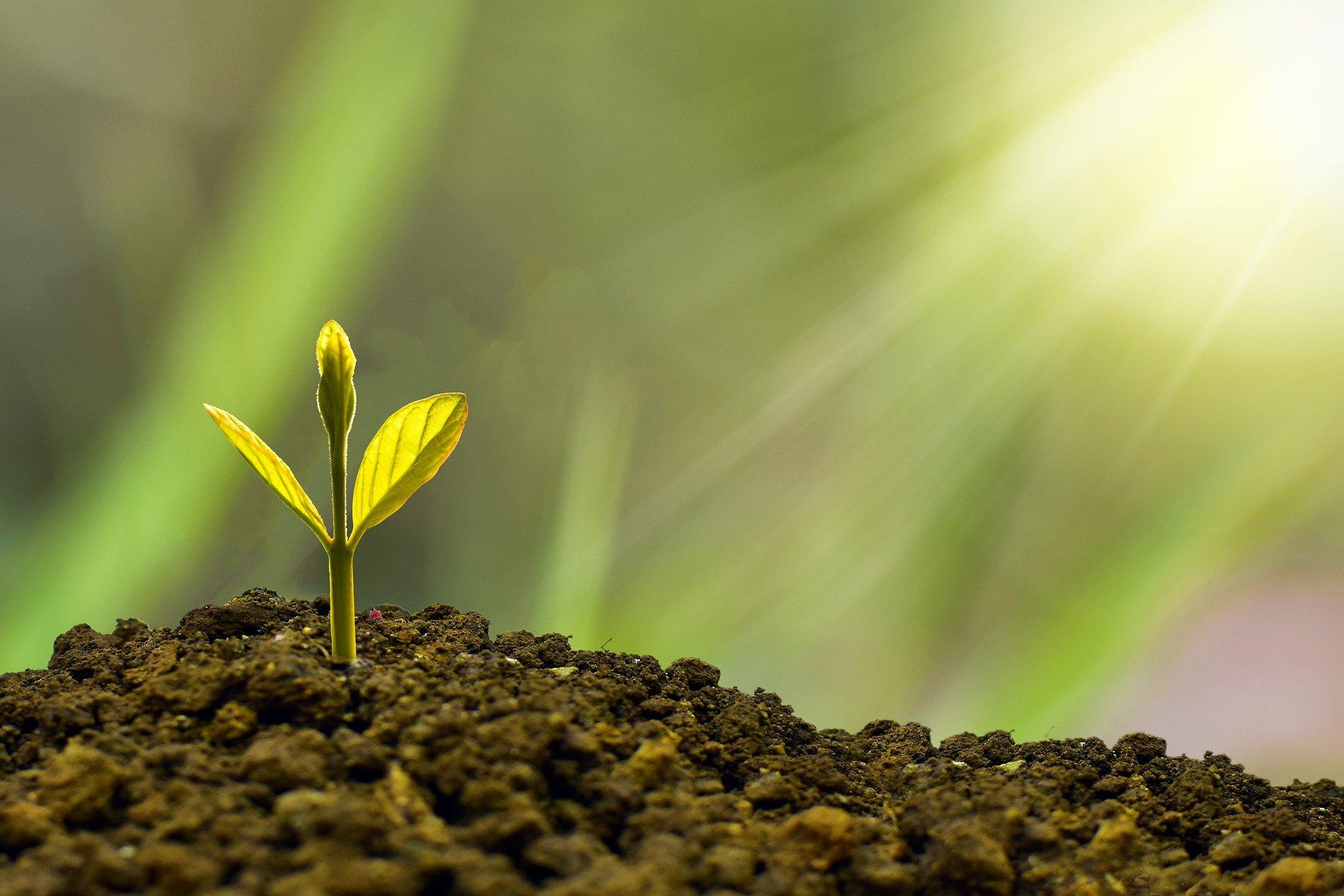 Un brote de planta saliendo entre la tierra